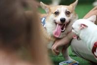 """Lạc giữa hàng trăm chú cún """"nhà giàu"""" trong ngày hội cún cưng Barkfest"""