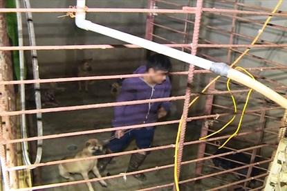 Thông tin mới nhất vụ triệt phá ổ nhóm trộm hàng trăm tấn chó