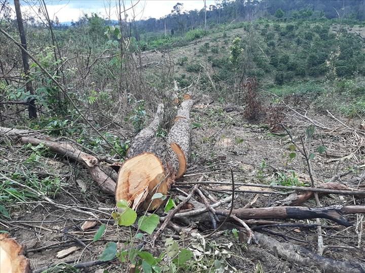 Khởi tố 3 đối tượng trong vụ phá gần 2,5ha rừng ở Lâm Đồng