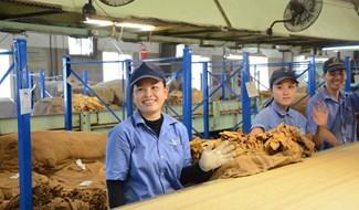 Mặc dù phải ứng phó với nhiều khó khăn trong quá trình chuyển đổi Tổng công ty Khánh Việt luôn dành sự ưu tiên là đảm bảo đời sống người lao động. Ảnh: T.Tuyến
