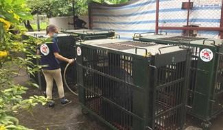 Ngày 13.10.2020, 7 cá thể gấu tại tỉnh Bình Dương đã được 2 người chủ đồng ý chuyển giao tới Cơ sở Bảo tồn gấu Ninh Bình. Ảnh: ENV