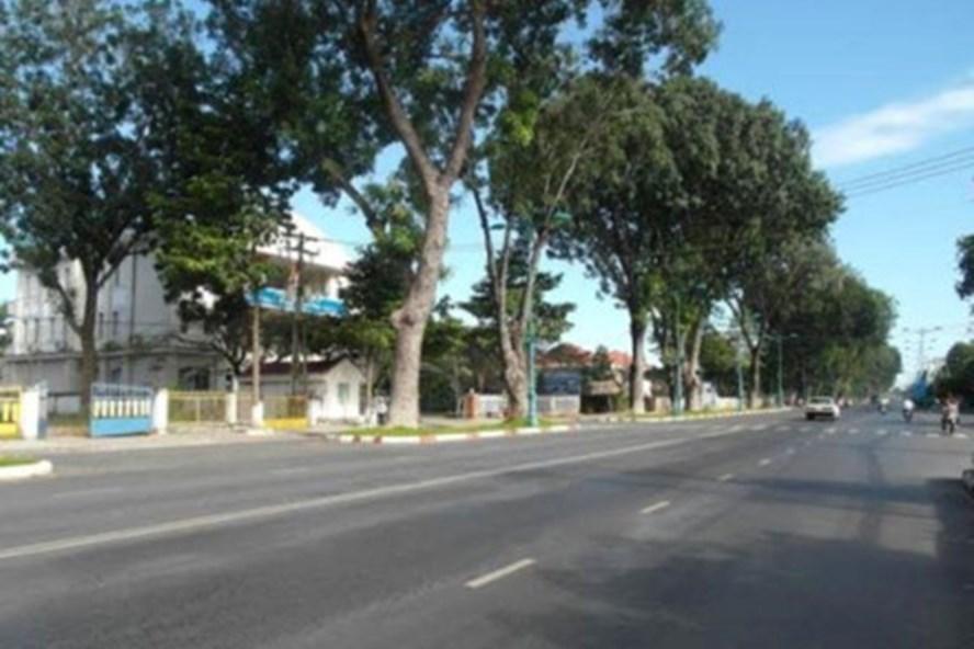 Hàng cây xà cừ trên đường 30.4, thành phố Tây Ninh . Ảnh: C.H