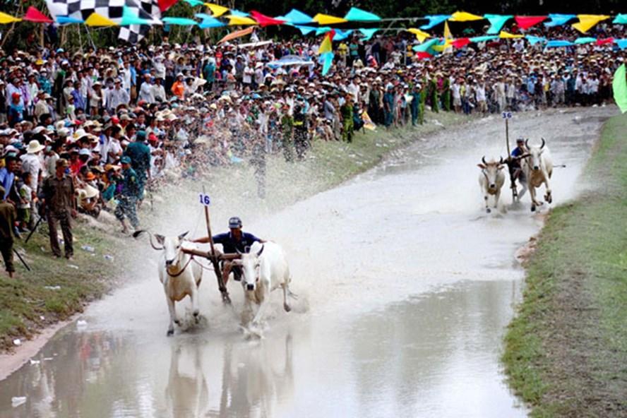 Hình ảnh thiếu tính hấp dẫn với sự cạnh tranh quyết liệt trong trận tranh ngôi vị quán quân Lễ hội đua bò Bảy Núi - An Giang năm 2013. Ảnh: Lâm Điền